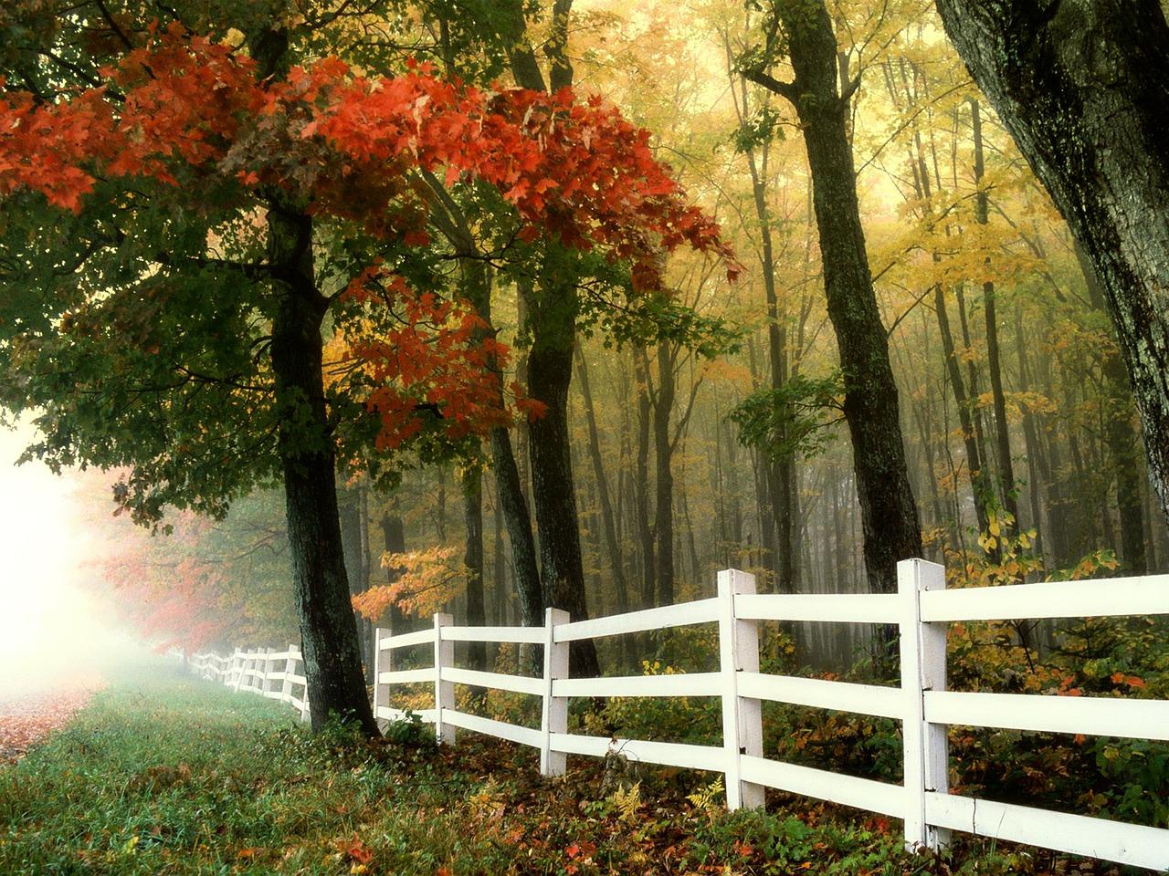 Jaki wybrać płotek ogrodowy – plastikowy, czy drewniany