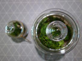 Greenbells – las w słoiku, jak zrobić własny?