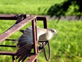 Jak odstraszyć gołębie Domowe sposoby na odstraszenie